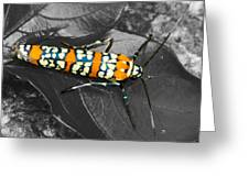 Colorful Insect - Ornate Bella Moth Greeting Card