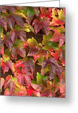 Colorful Ivy Wall In Autumn Ireland Greeting Card