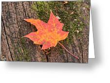 Colorful Leaf Greeting Card
