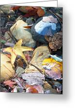 Colorful Leaves And Rocks In Creek Greeting Card