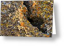 Colorful Lichens Greeting Card
