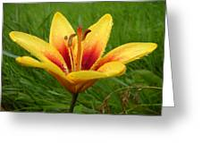 Colorful Lily Dew Drops Greeting Card