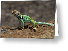 Colorful Lizard Greeting Card