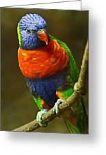 Colorful Lorikeet Greeting Card