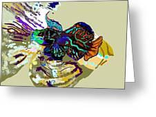 Colorful Manderin Fish Greeting Card
