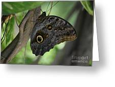 Colorful Markings On A Blue Morpho Butterfly On A Tree Trunk Greeting Card