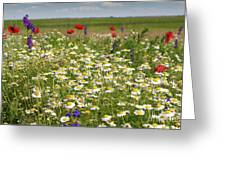 Colorful Meadow With Wild Flowers Greeting Card