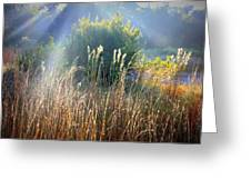 Colorful Morning Marsh Greeting Card