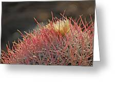 Colorful Needles Greeting Card