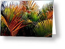 Colorful Palm Leaves Greeting Card