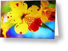 Colorful Pansies Greeting Card