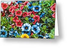 Colorful Petunias 2 Greeting Card