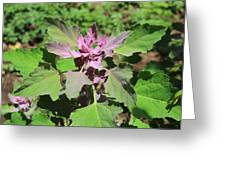 Colorful Plants Greeting Card
