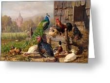 Colorful Poultry Greeting Card