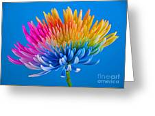 Colorful Precious Greeting Card