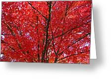 Colorful Red Orange Fall Tree Leaves Art Prints Autumn Greeting Card