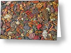 Colorful Rocks In Stream Bed Montana Greeting Card