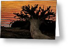 Colorful Roots Greeting Card