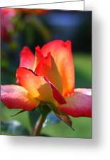 Colorful Rose Greeting Card