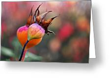 Colorful Rose Hips Greeting Card