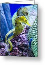 Colorful Seahorses Greeting Card