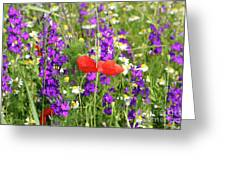 Colorful Spring Wild Flowers Greeting Card