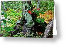 Colorful Stump Greeting Card