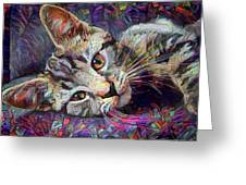Colorful Tabby Kitten Greeting Card