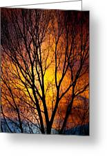 Colorful Tree Silhouettes Greeting Card