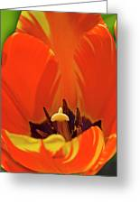 Colorful Tulip Greeting Card