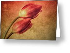 Colorful Tulips Textured Greeting Card
