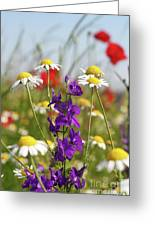 Colorful Wild Flowers Nature Scene Greeting Card