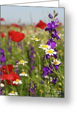 Colorful Wild Flowers Nature Spring Scene Greeting Card