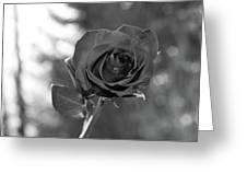 Colorless Rose Greeting Card