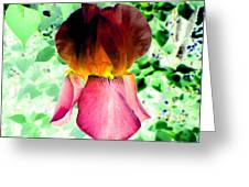 Colormax 3 Greeting Card