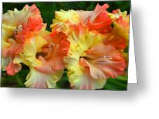 Colors Of August Greeting Card