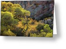 Colors Of Autumn In The Sonoran  Greeting Card