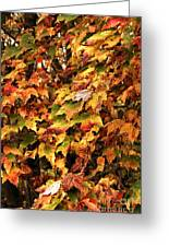 Colors Of Autumn Greeting Card by John Rizzuto
