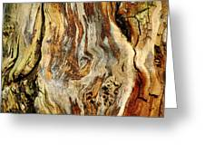 Colors Of Bark Greeting Card