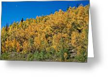 Colors Of Colorado  Greeting Card