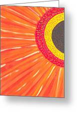 Colors Of Daisy Greeting Card