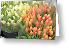Colors Of Gauze Greeting Card