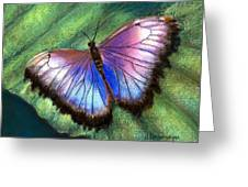 Colors Of Nature - Hunawihr Morpho Greeting Card