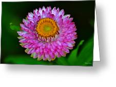 Colors Of Nature - Grand Opening 001 Greeting Card