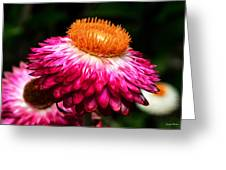 Colors Of Nature - Grand Opening 002 Greeting Card