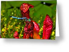 Colors Of Nature - Profile Of A Dragonfly 003 Greeting Card