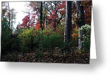 Colors Of The Forest Greeting Card