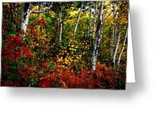 Colors On Mcclure Pass Greeting Card