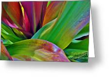 Colour Leaf 2 Greeting Card