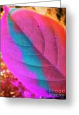 Colour Leaf Greeting Card